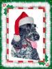 Merry Xmas from Meg