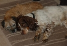 Digby and Max