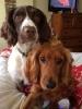 Jasper & Bailey
