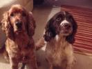 Bailey & Rea
